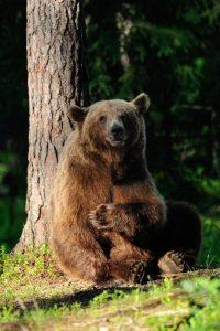 bear sitting by tree