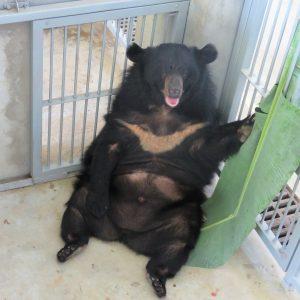 Bear in Lockdown